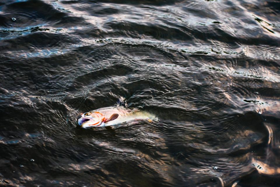 Сигнали за умряла риба по долното поречие на Тунджа са постъпили през последните дни до Регионалната инспекция по околната среда в Стара Загора, коментира...