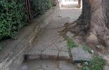 След сигнали за паднало дърво, очаква се неговото премахване