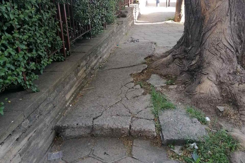 """Във връзка с получени сигнали за опасно дърво до оградата на детска градина """"Божур"""", Община Сливен обмисля неговото премахване. Дървото е над 80 години,..."""