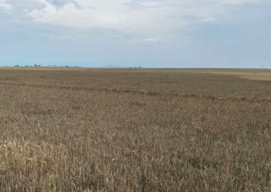 Зърнопроизводителите в Ямболска област също пострадаха от сушата тази година. Площите с пшеница в района бяха едни от най-засегнатите в цялата страна....