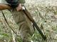 След убития зубър, сега бракониери застреляха елени