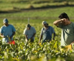 В Сливен започна кампания срещу трафика на хора с цел трудова експлоатация