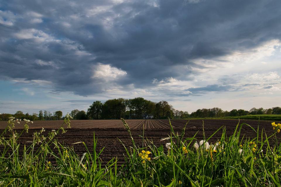 В неделя преди обяд времето ще бъде предимно слънчево. След обяд ще се развива купеста и купесто-дъждовна облачност и на много места ще превали и прегърми. Максималните...