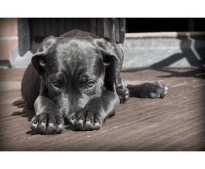 Собственици на кучета в бургаски квартал алармират за хвърлена отрова по улиците