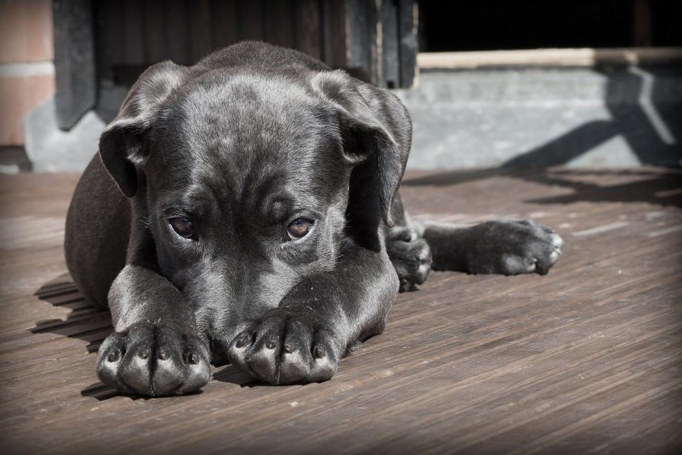 """Собственици на домашни любимци от бургаския квартал """"Долно Езерово"""" се оплакаха, че неизвестни хвърлят отрова и това застрашава живота на кучетата им...."""