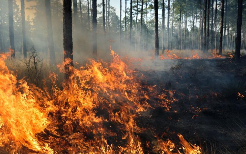 Четири пожарни автомобила, служители на Държавно горско стопанство – Сливен и 18 доброволци се включиха вчера в гасенето на пожар край твърдишкото село...