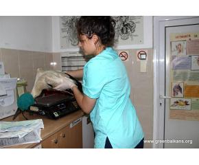 Спасиха четири малки щъркелчета в сливенско село