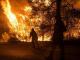 Спасиха от пожар гора край Шивачево