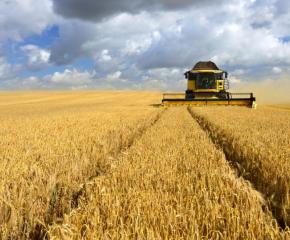 Средният добив от пшеница е 617 килограма от декар в ямболско