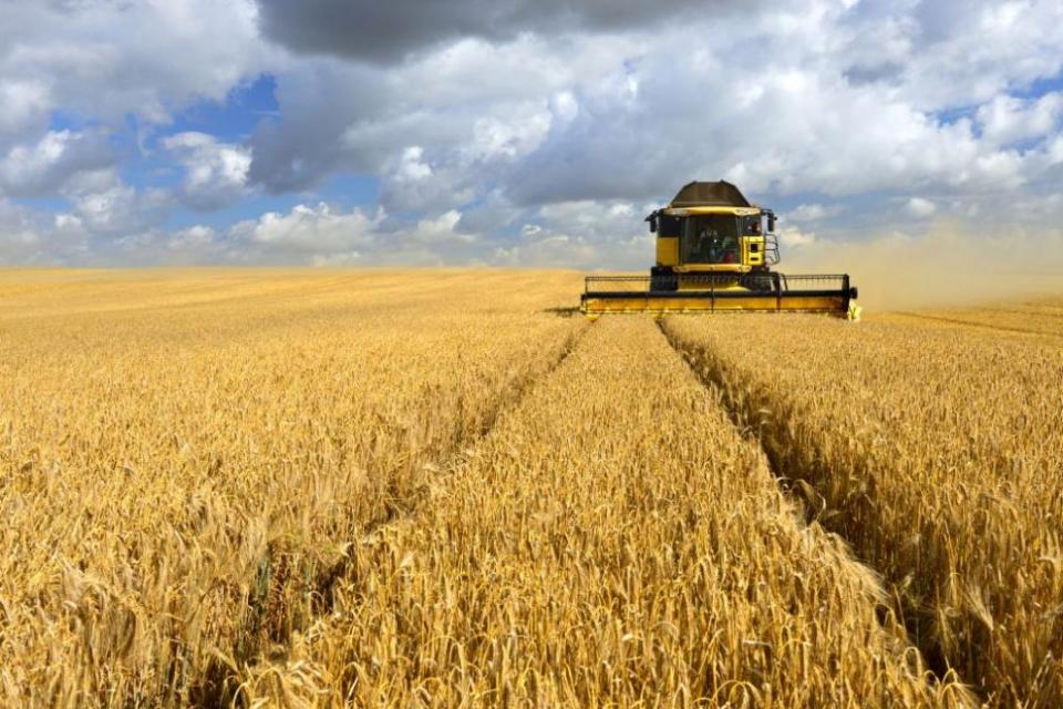 В Ямболска област средният добив от пшеницата е 617 килограма при ожънати 145 000 декара от засети общо 695 000 декара, съобщи за БТА директорът на областната...