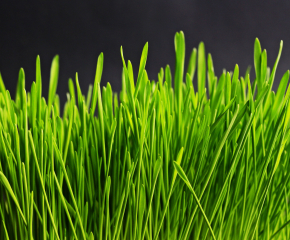 Стартират почистване на общинската пътна мрежа от храсти и треви в Сливен