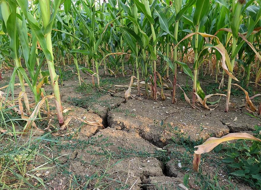 От днес, 19 ноември 2020 г., стартира приемът на заявления по de minimis за компенсиране на щетите от сушата през 2020 г. за стопаните от областите Ямбол,...