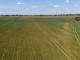 Сушата е ударила зърното в Ямбол, Сливен и други области в страната