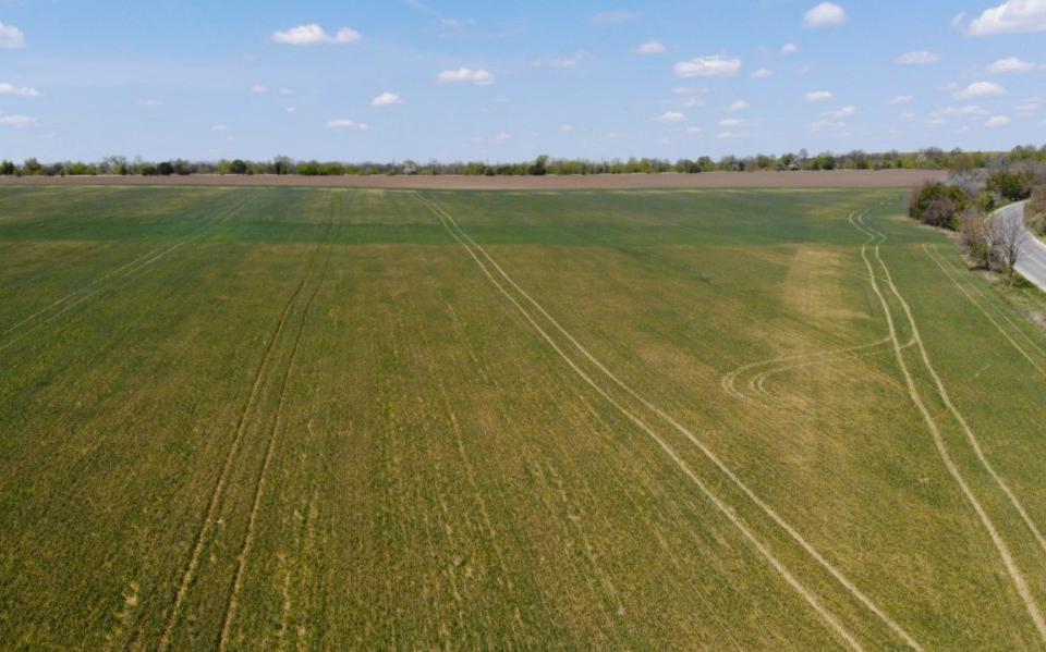 Сушата е нанесла поражения по посевите в районите на Източна и Североизточна България. Независимо от това се очаква България да има добра реколта от зърно....