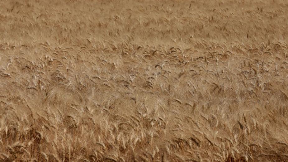 Сушата от началото на годината нанесе поражения на голяма част от есенниците в общината, заяви агрономът Жельо Желев. За пшеницата дъждът закъсня с 10-15...