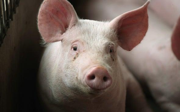 Близо 5 млн. лв са изплатени за почистване и дезинфекция на личните стопанства, в които се отглеждат домашни свине, съобщи в Стара Загора министърът на...