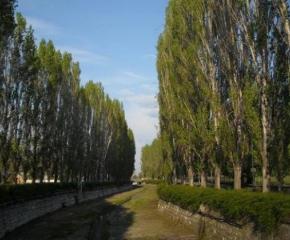 """Тополите от емблематичната песен на """"Щурците"""" в Хасково са опасни и ще бъдат изрязани"""