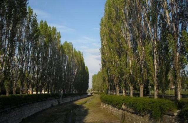 """Eмблематичните тополи край Хасковската река, които бяха възпети в песен на """"Щурците"""", са на път да останат в историята. Или поне голяма част от тях, съобщават..."""