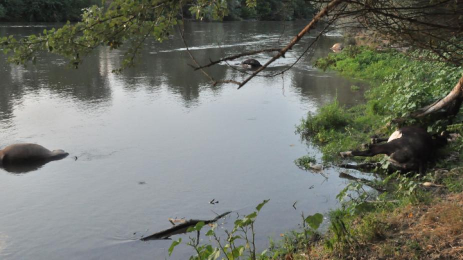 Торове са замърсили водата в канала в Хасковско, който се влива в река Марица. Това стана ясно от брифинг на министрите на здравеопазването и на околната...