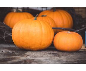 Традиционните есенни празници на тиквата започват в Севлиево