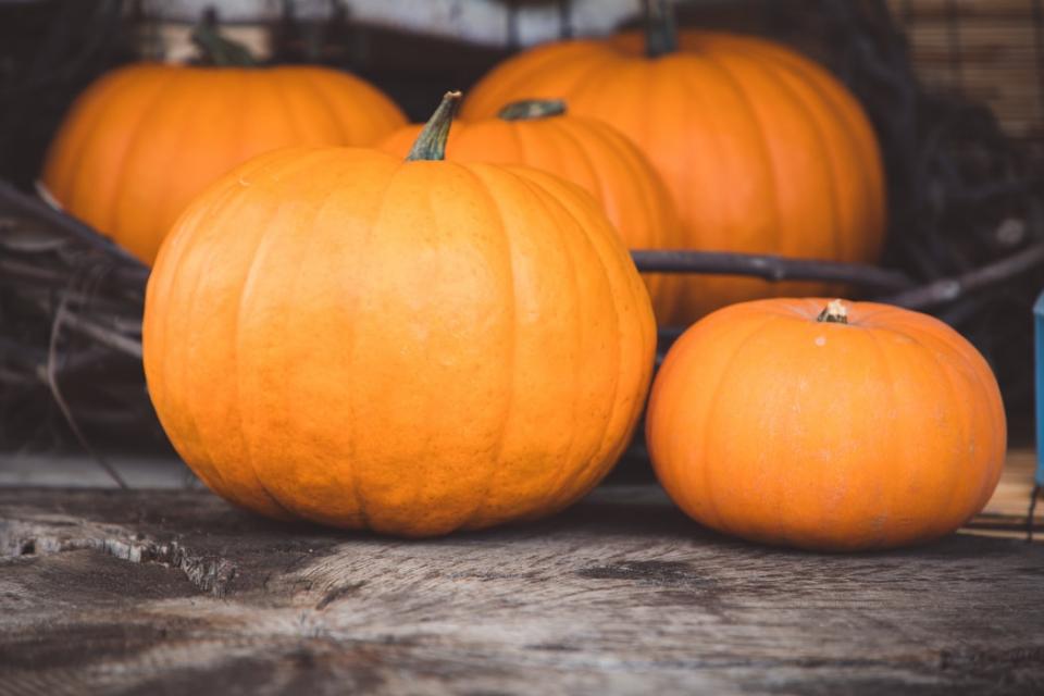 В Севлиево започват традиционните есенни празници на тиквата. Тържествата, които се провеждат от 16 години насам, продължават до 14 октомври, съобщава...