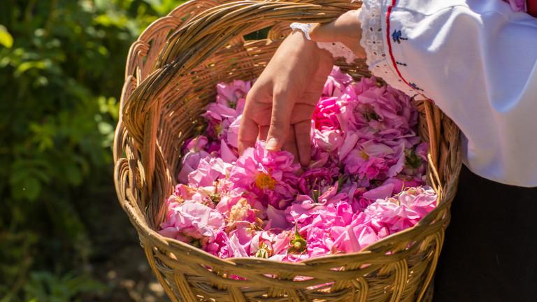 След годината на пандемия и отменени десетки събития, през тази година празникът на розата се провежда присъствено. До края на седмицата предстоят кулминационните...