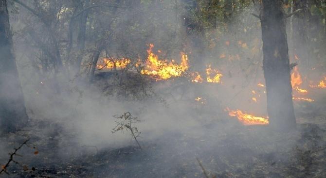 Трети ден огнеборците се борят с пожар край Котел. Огънят е пламнал в сряда около обяд. Пламнала е мъртва горска постелка и папрати в землището на гр....