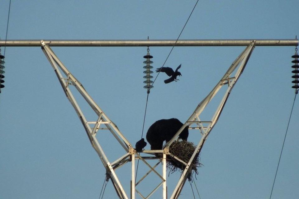 В стралджанските села Саранско, Каменец и Войника е планирано изключване на тока от 9 до 12 часа утре, съобщават от електроразпределителното дружество....