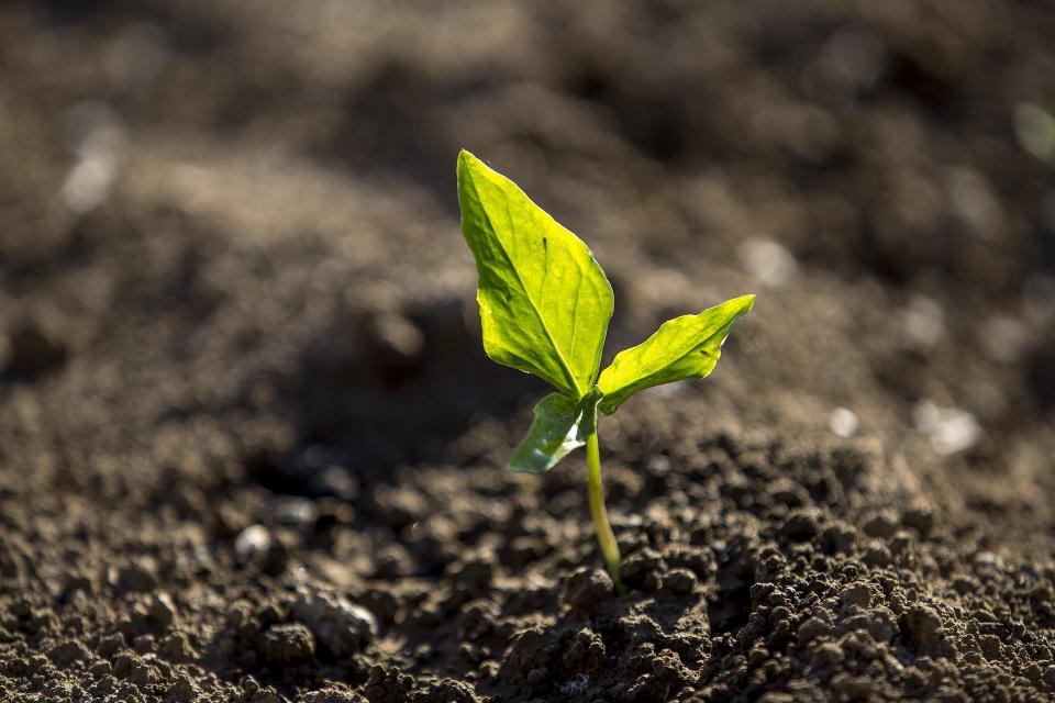 Цената на земеделската земя в региона на Стара Загора, както и в Сливен, Ямбол и Бургас, отбелязва ръст от около 10% през изминалата 2020 година, съобщава...