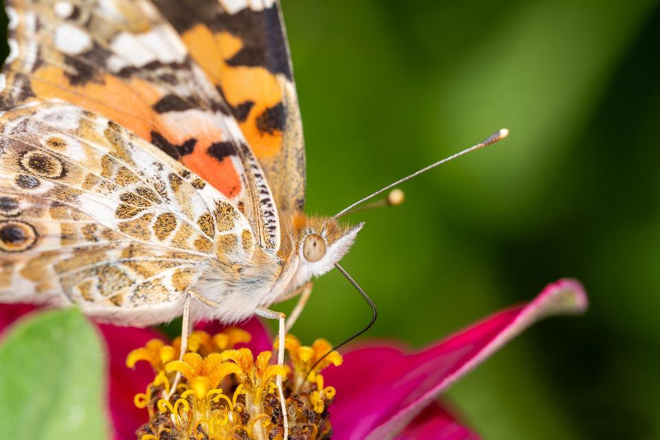 На 22 май –Международният ден на биологичното разнообразие, Българска фондация Биоразнообразие отново даваначалото на кампанията за номиниране на най-ярките...