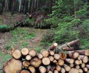 Установиха незаконна сеч в землището на село Братан