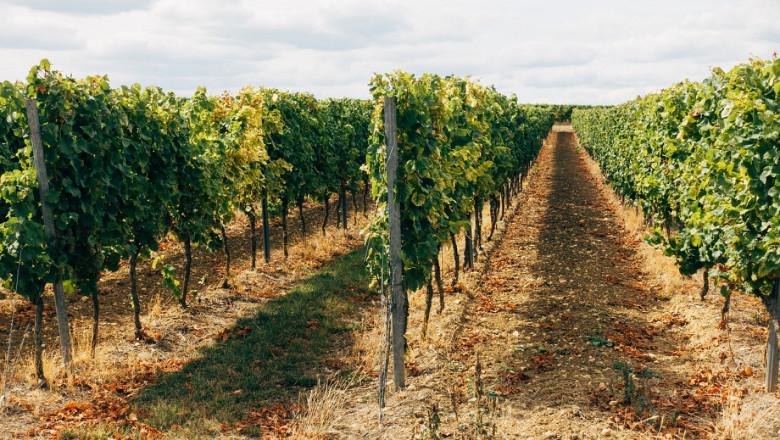 Срокът на действие на някои извънредни мерки срещу Covid-19 в лозаро-винарския сектор се удължава, пишат от БНР. За да подпомогне земеделците да се справят...