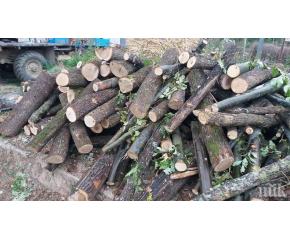 Удължава се срокът за заплащане на дърва за огрев от лицата с увреждания с над 71% намалена работоспособност
