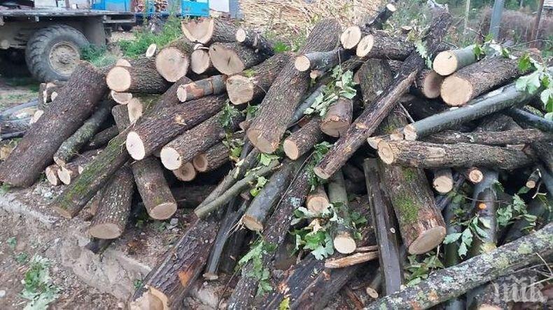 Община Сливен уведомява лицата с увреждания с над 71% намалена работоспособност, кандидатствали и одобрени за закупуване на дърва за огрев за зимния период...
