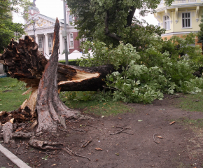 Ураганен вятър прекъсна електричеството на места в сливенско