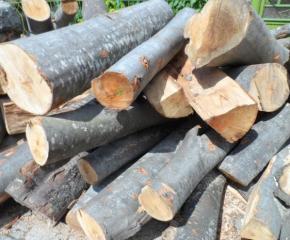 """Установиха незаконен добив на дървесина в резерват """"Долна Топчия"""""""