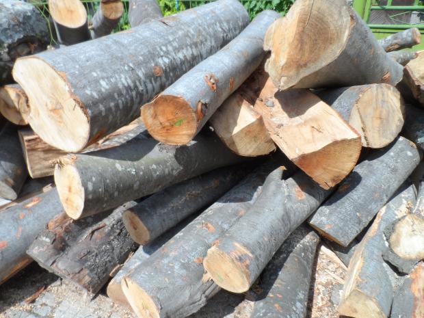 Служители от РУ – Елхово установиха незаконен добив на дървесина. През нощта срещу 31 октомври, в хода на полицейска операция съвместно с представител...