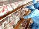 Установиха птичи грип във ферма в хасковско
