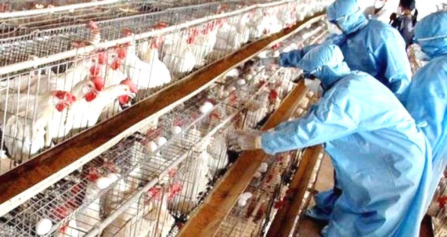 Българска агенция по безопасност на храните (БАБХ) констатира огнище на Високопатогенна Инфлуенца А (грип) по птиците в животновъден обект в землището...