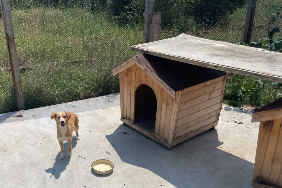 Все повече са осиновените кучета от Общинския приют за безстопанствени животни в Ямбол, а върнатите на улицата са по-малко. През 2019 година са осиновени...