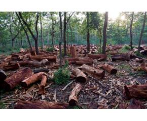 Увеличават се нарушенията в горите след въвеждането на извънредното положение