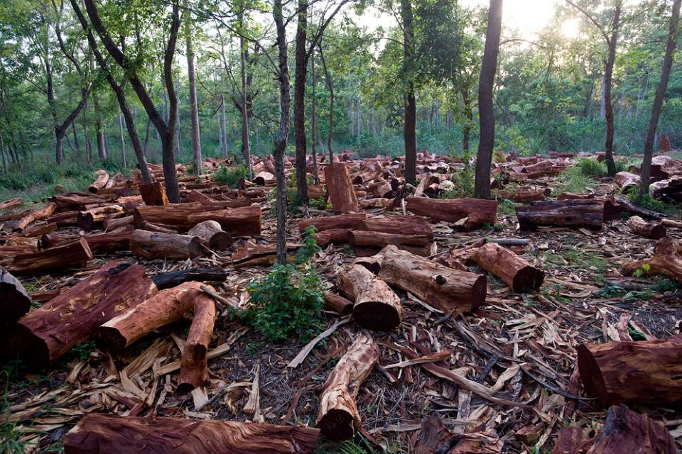 Над 70 кубически метра незаконно добита строителна дървесина е била конфискувана на територията на Югозападното държавно предприятие само за последната...