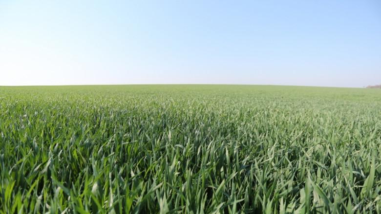 Валежите, които паднаха през последните дни в Добричка област спасиха реколтата от пшеница, която беше сериозно застрашена от продължителната суша, предаде...