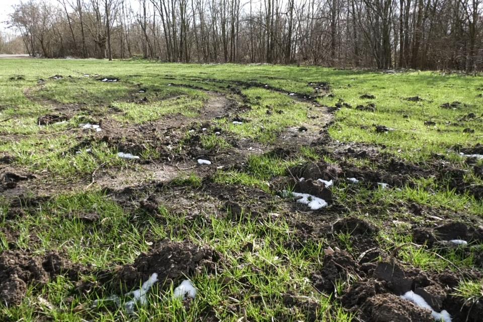 Община Ямбол многократно отправи молба към шофьорите да не навлизат в тревните площи на Ормана, но въпреки това граждани сериозно са увредили тревното...