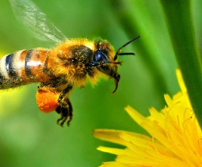 Важно за пчелари и земеделски стопани