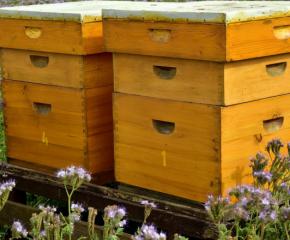 Вече всеки у нас може да си осинови пчелен кошер