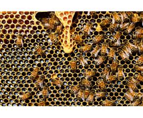 Ветеринари проверяват състоянието на пчелите в цялата страна