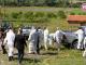 Ветеринари влязоха във фермата на Ана Петрова от Болярово (ВИДЕО)