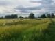 Висока трева и следи от автомобили - така изглежда стадионът в село Роза