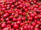 Вносът на череши от Турция проваля реколтата в Кюстендилско